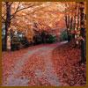 autumn-path-sm.jpg