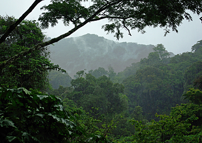 Bwindi National Park