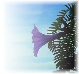 Nature's Whisper