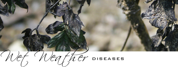 Wet Weather Diseases