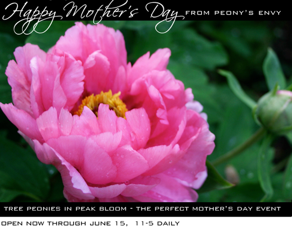 Happy Mother's Day from Peony's Envy