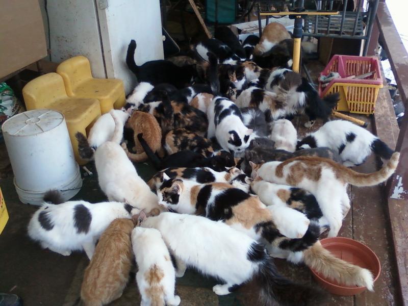 Parkton Cats