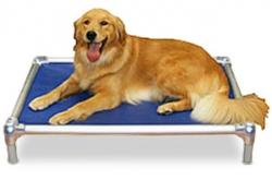 Kuranda Dog