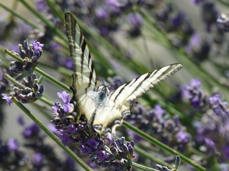 butterflyatrest