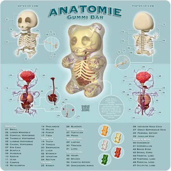 Gummy Anatomy