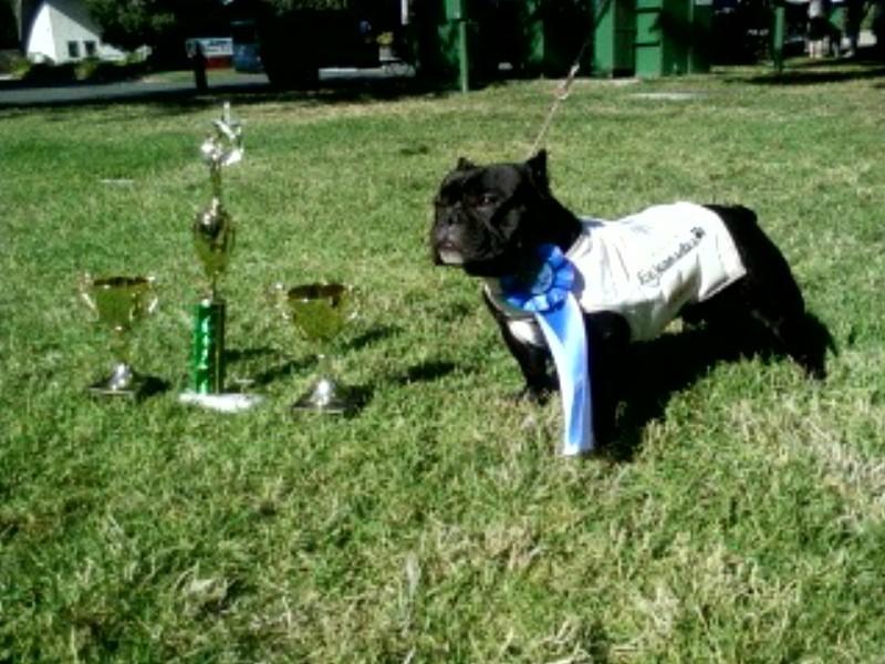 Dog Shows Blaisdell Oahu