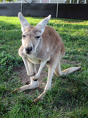 how to get rid of kangaroo pouch after pregnancy