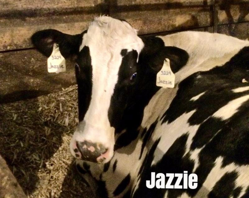 July 2016 Cow of the Month