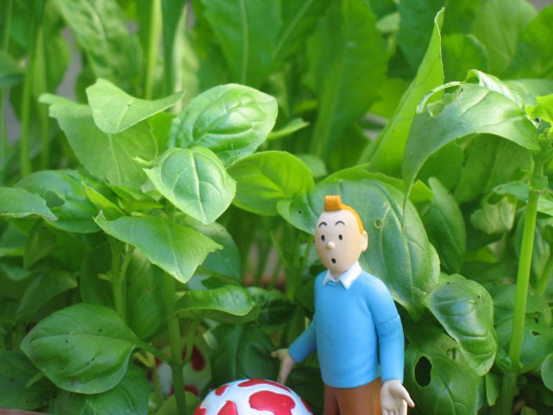 Tintin with Basil