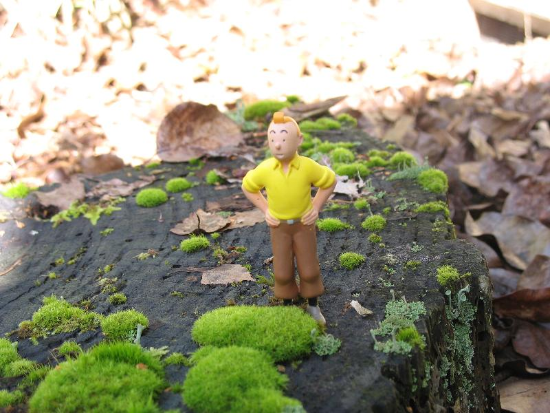 Tintin w/ Moss
