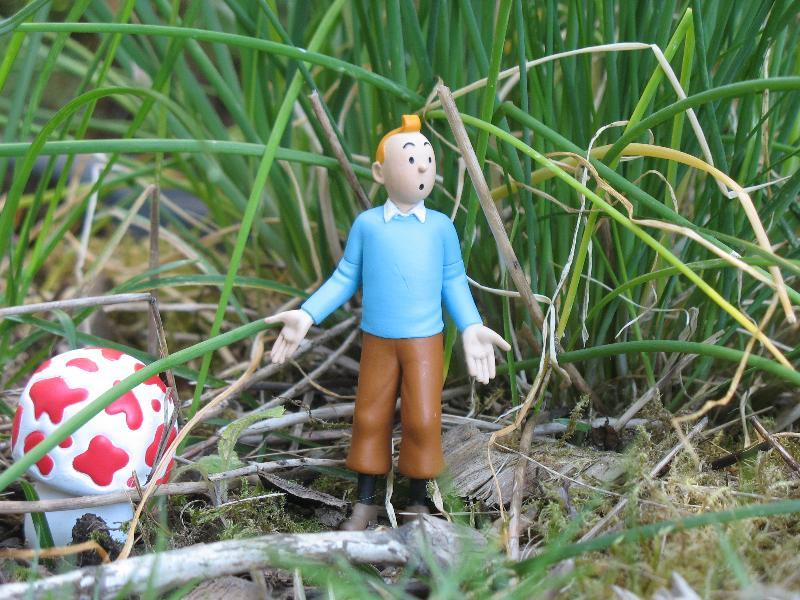 Tintin in Grass