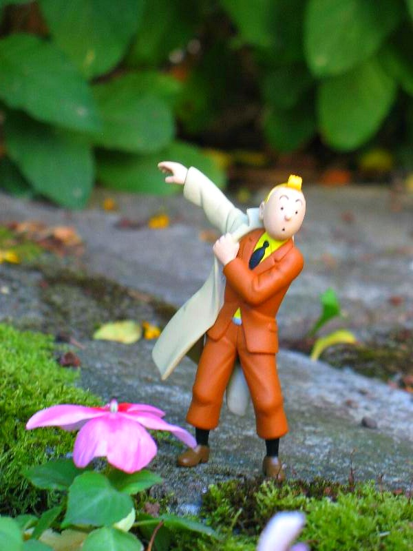 Tintin Taking Off Coat