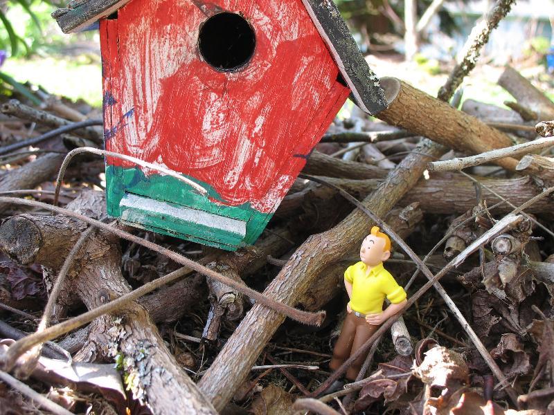 Tintin w/ Birdhouse