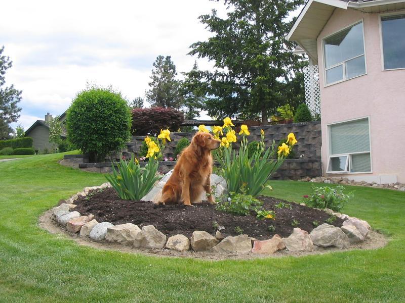 Best Pets and Plants - Public Vote - Val Palmer