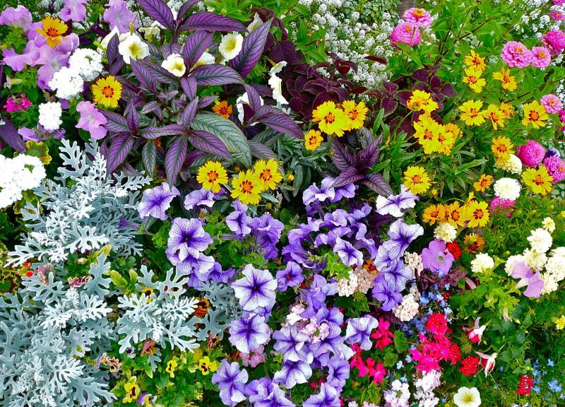 Best Annual Flower Bed - Staff Vote - Betty Gordon