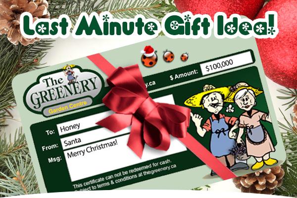 Greenery Last Minute Gift Idea