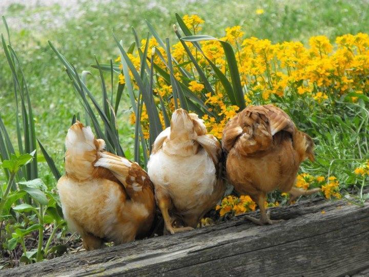 Best Pets and Plants - Staff Vote - Lauren Wilson