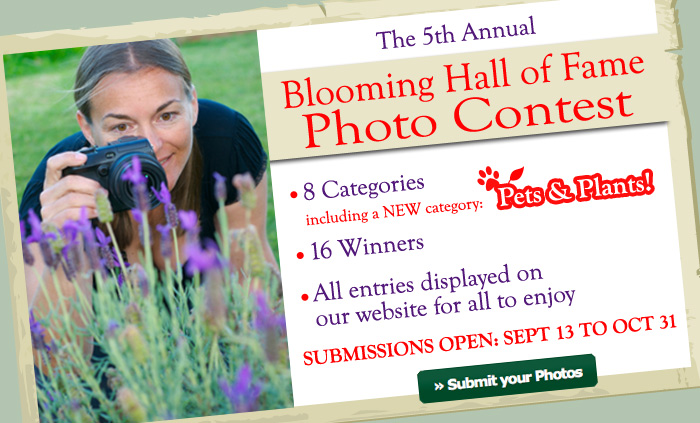 Blooming Hall of Fame 5th Annual Contest