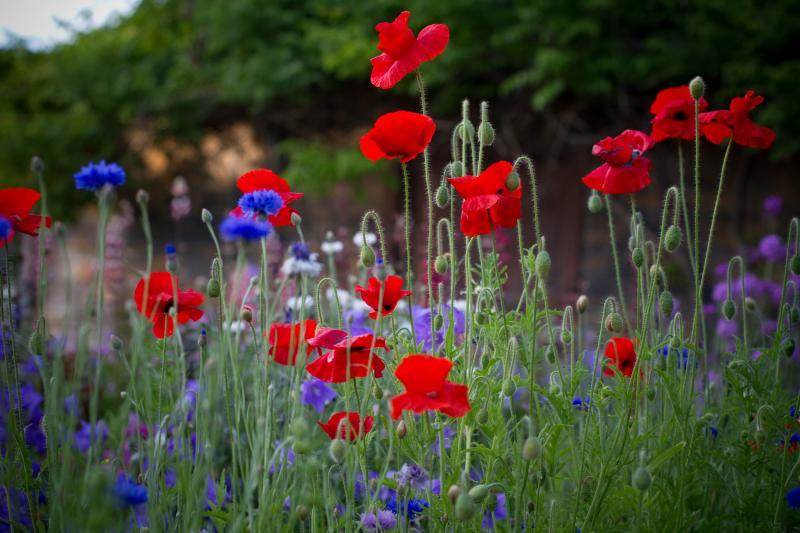 Best Perennial Flower Bed - Public Vote - Renee Kirby