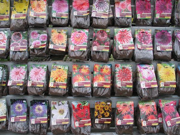 Assorted Dahlia Bulbs