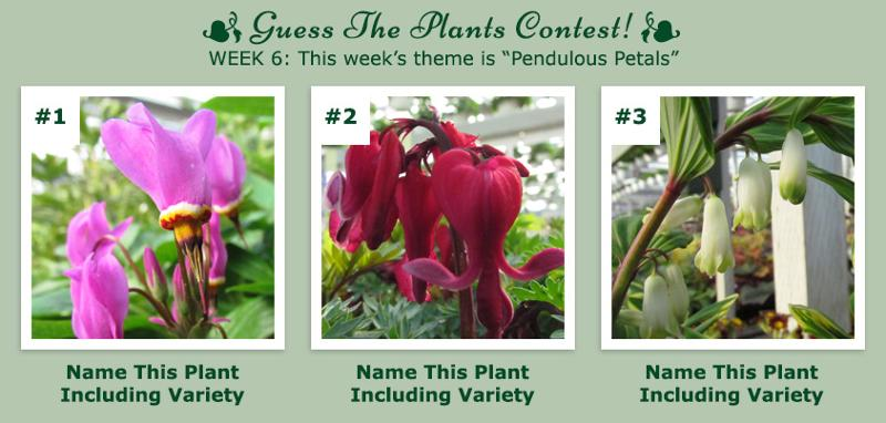 Guess The Plants Contest - Week 6