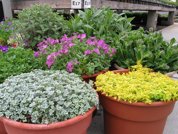 Perennial Stock Pots