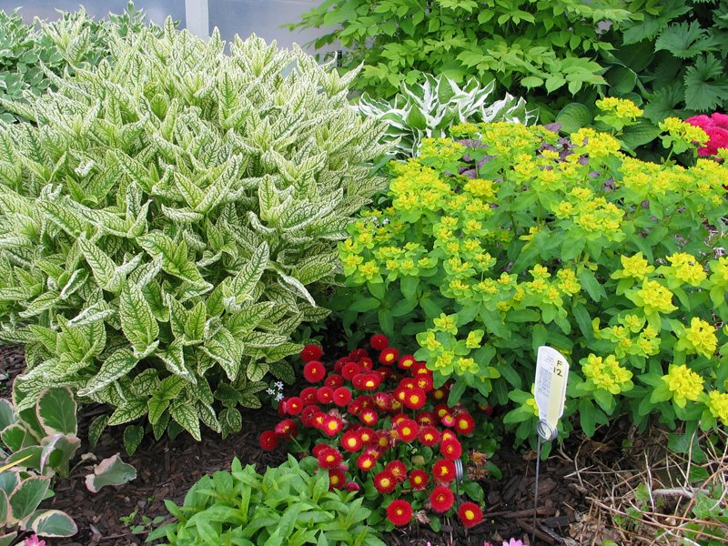 Perennial Display Garden1