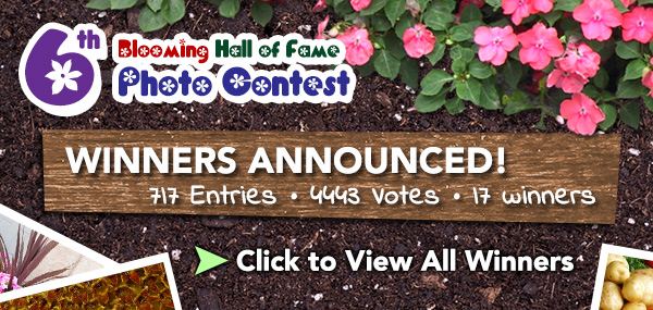 6th Blooming Hall of Fame 2012 Winners Announced