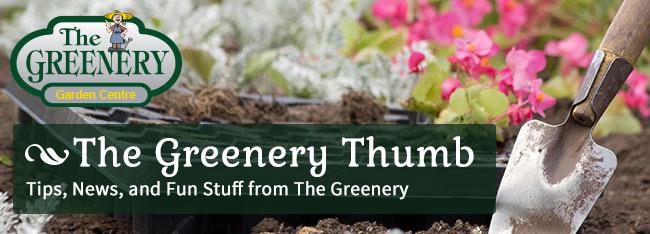 The Greenery Thumb Newsletter TGGC