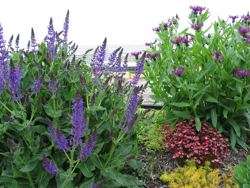 Perennial Display Garden2
