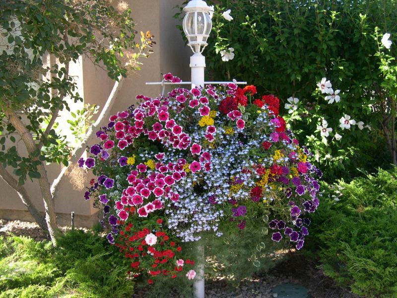 Best Hanging Basket - Staff Vote - Linda Sellen