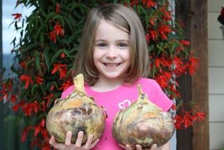 Kelsae Onions
