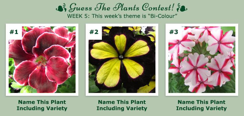 Guess The Plants Contest - Week 5