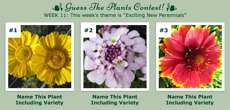 Guess The Plants Contest - Week 11