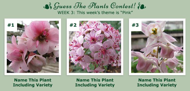 Guess The Plants - April Week 3