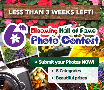 6th Blooming Hall of Fame Photo Contest