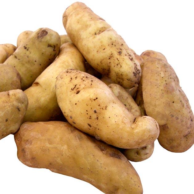 Yukon Gold Seed Potatoes