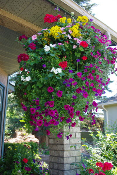 Best Hanging Basket - People's Choice