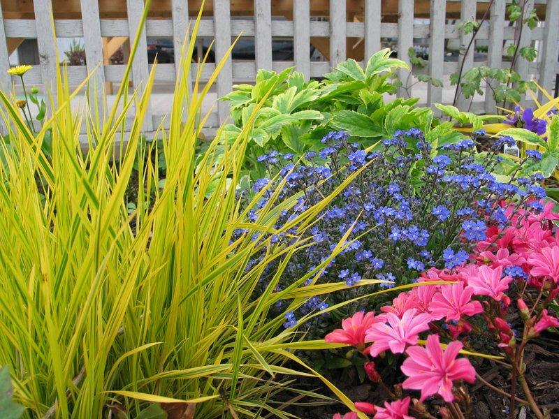 Perennial Display Garden