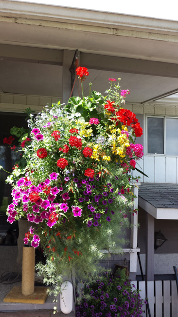 Family Hanging Basket