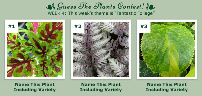Guess The Plants Contest - Week 4