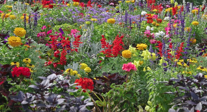 Best Annual Flower Bed - People's Choice