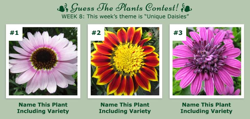Guess The Plants Contest - Week 8