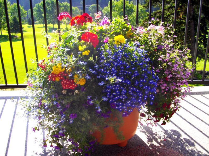 Best Planter - Staff Vote - Linda St. Martin