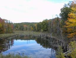 wetland MN