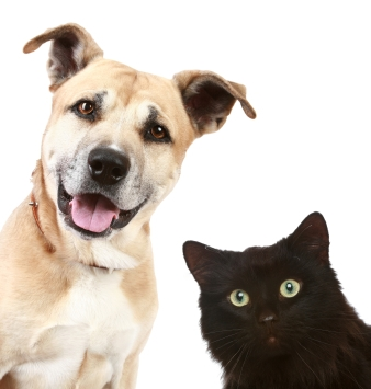 Dog&black cat