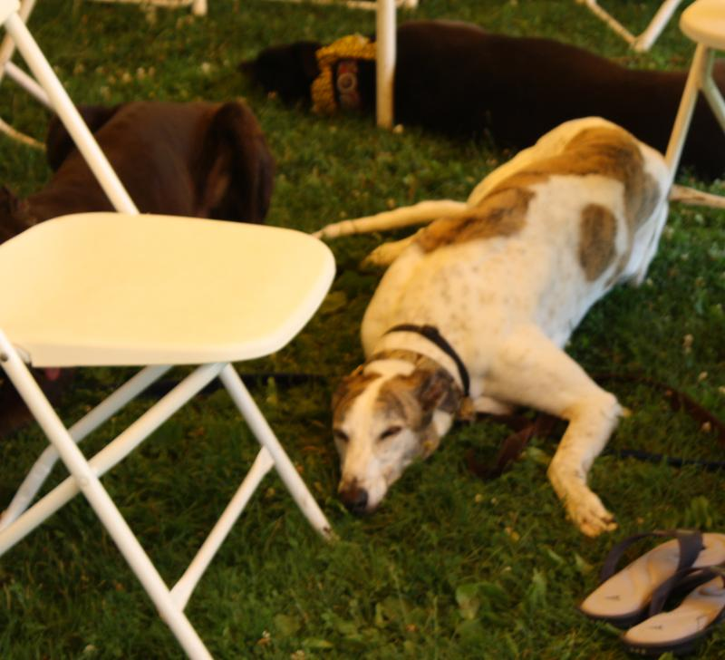 Bernie at 2010 picnic
