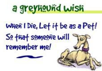 Greyhound Wish