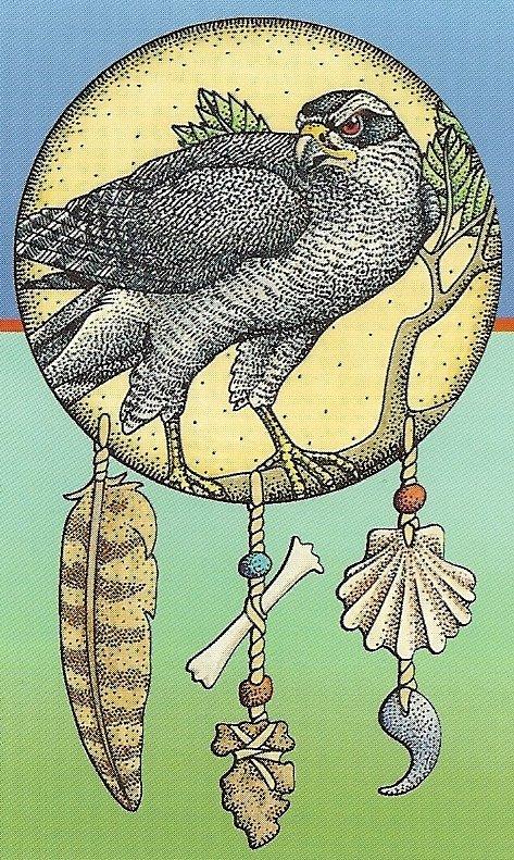 Animal Totem The Hawk
