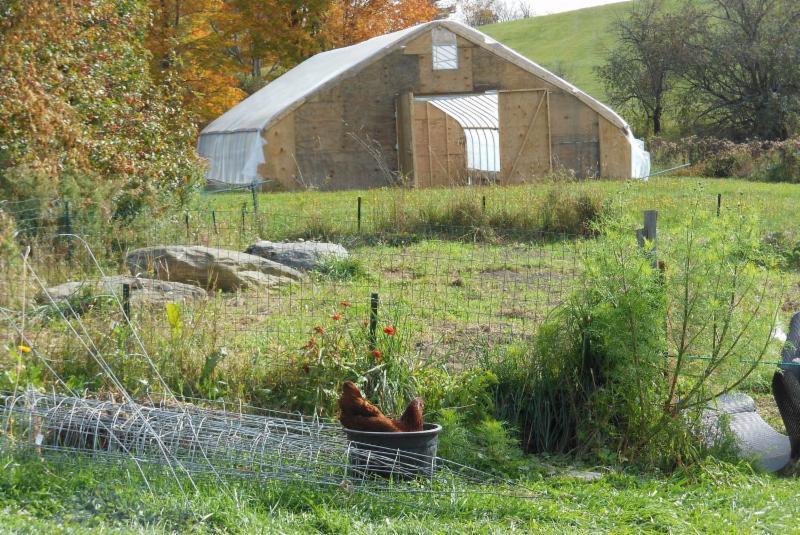 hoop house scenery chicken